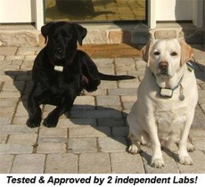 lab-dogguard-dogs-300x274